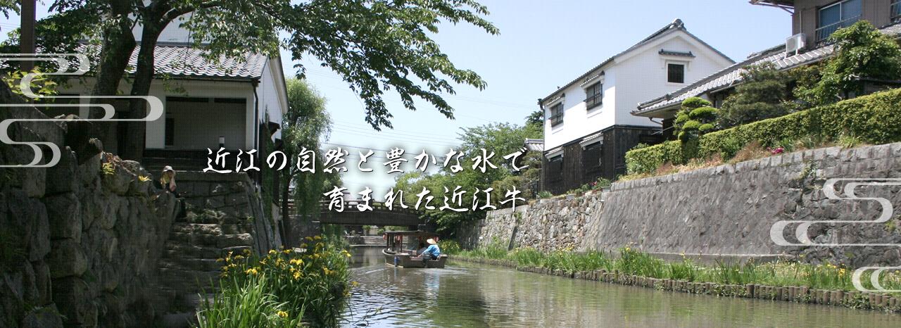 近江の自然と豊かな水で育まれた近江牛